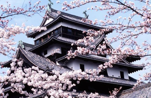 fleurs-cerisiers-japon-temple