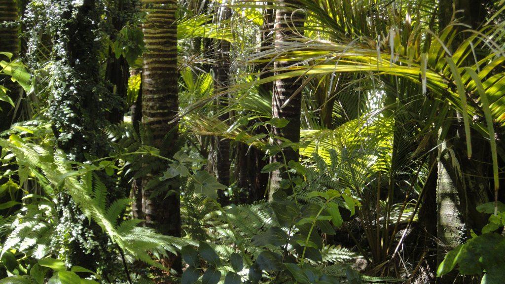 La forêt amazonienne brésilienne