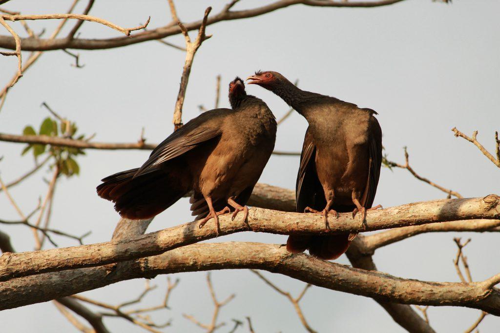 Les oiseaux du parc Pantanal