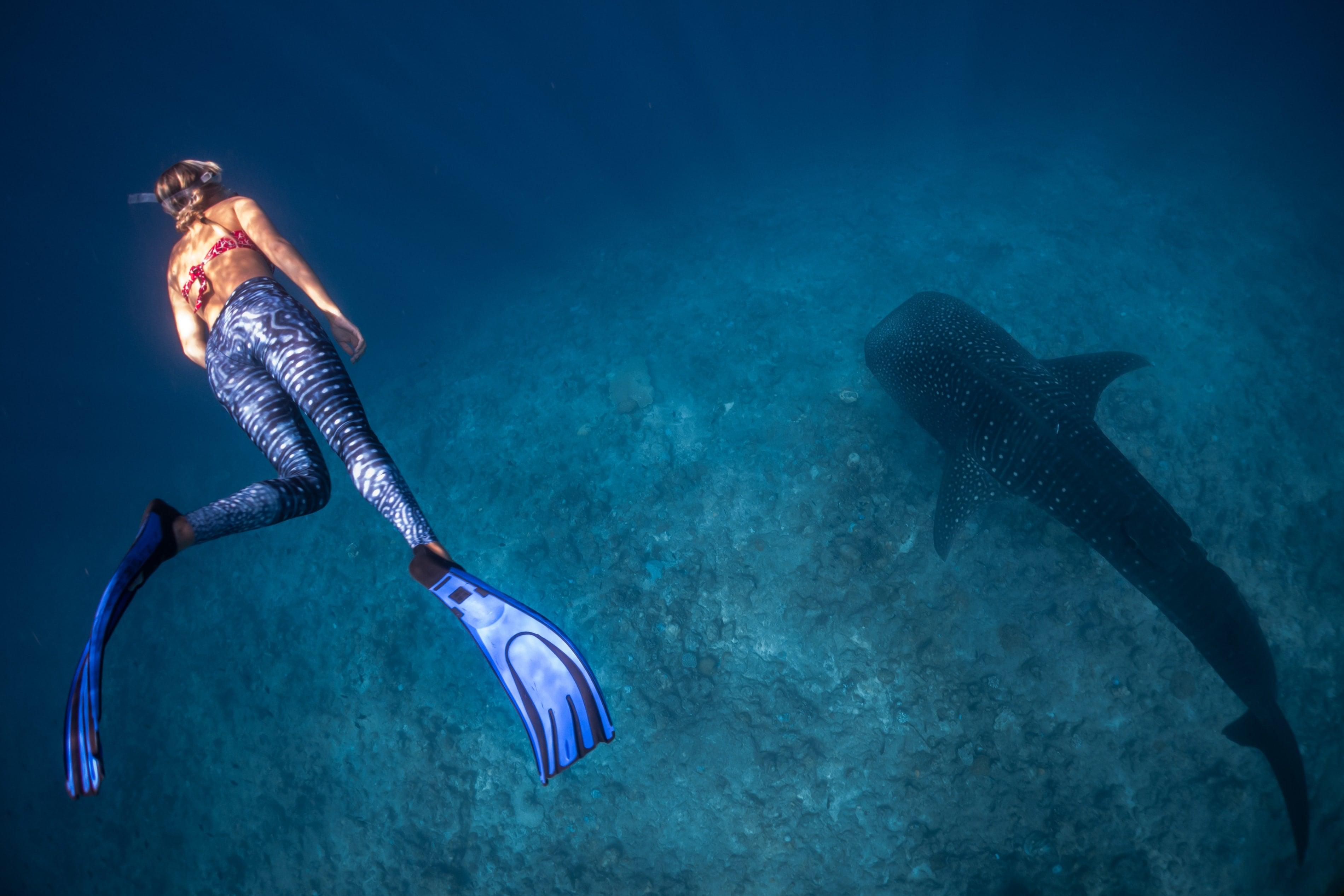 nage avec des requins baleine aux maldives