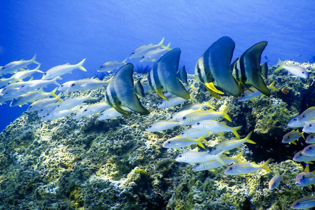 plongée sous marine en thailande