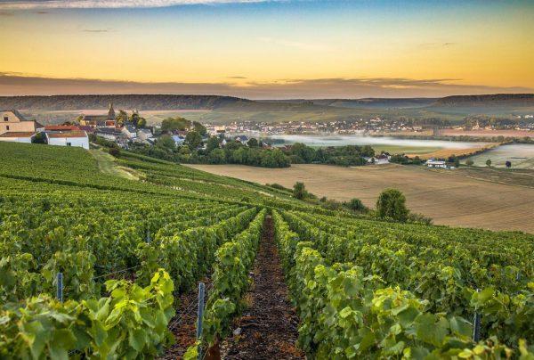 5 activités incontournables à faire en région Champagne
