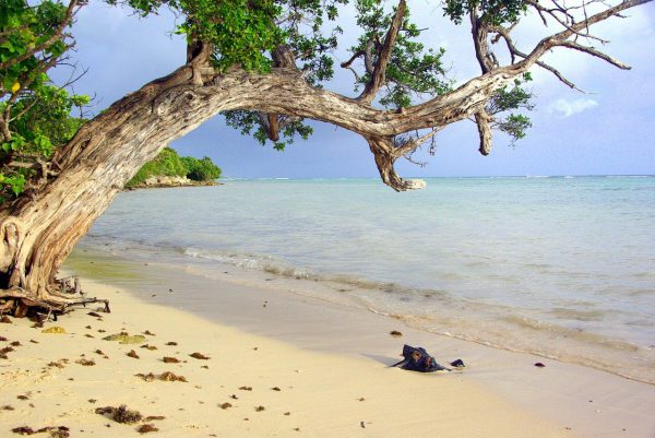 Quel est le meilleur moment pour visiter la Guadeloupe ?