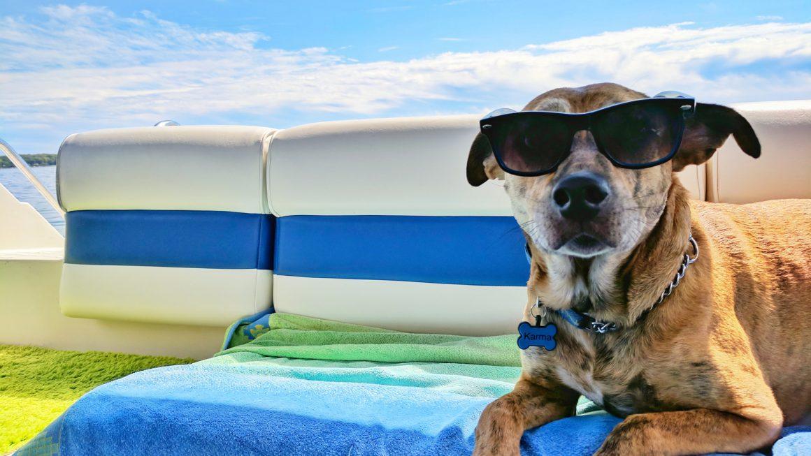 chien avec lunettes de soleil sur une serviette